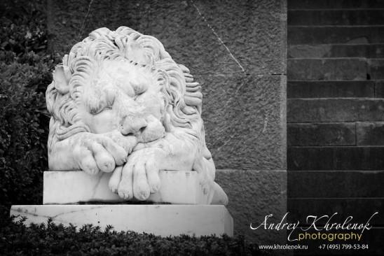 Скульптура льва из Воронцовского парка Алупки © Фотограф Андрей Хроленок