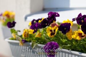 Цветы на окне коттеджа © Фотограф Андрей Хроленок
