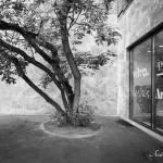Этюд с деревом © Фотограф Андрей Хроленок